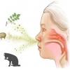 Аллергический ринит. Аллергический насморк
