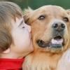 Дети и домашние животные: соблюдаем правила безопасности