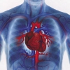 Как лечить аритмию сердца народными средствами