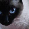 Как вылечить цистит у кошек
