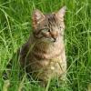 Кошки, коты и котята, а также все, что с ними связано
