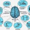 Лечение и последствия инсульта левой и правой стороны