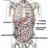Причины тяжести и боли в правом подреберье