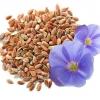 Семя льна: лечебные свойства и противопоказания