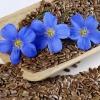 Семя льна: применение в народной медицине