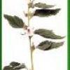 Тахикардия лечение тахикардии народными средствами