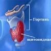Тиреотоксикоз, гипотиреоз щитовидной железы, узлы. Лечение народными средствами.