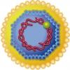 Вирусные гепатиты: можно ли вылечить?