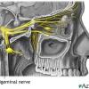 Воспаление (невралгия) тройничного нерва: симптомы и лечение