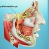 Тройничный нерв: симптомы поражения тройничного нерва